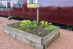 One of the flower beds, now with a great display of spring flowers.