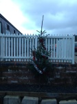 The Whitrope Christmas tree, there are plenty to chose from up there.